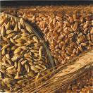 wheat, food storage